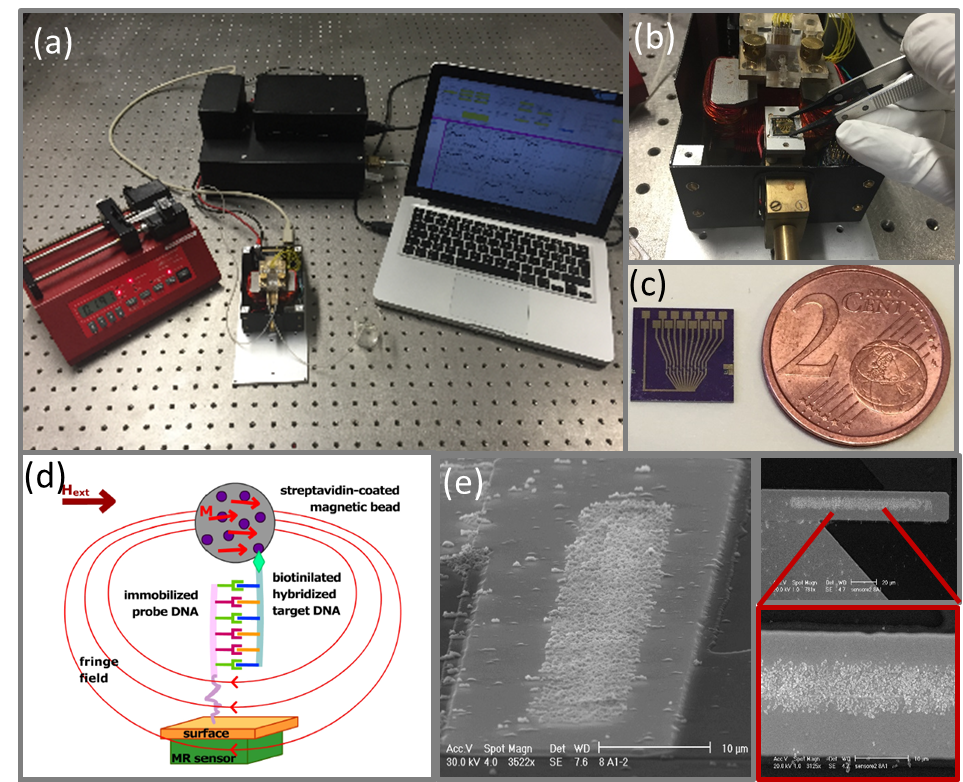 (a) Integrated platform for the DNA detection; b) particular of the modulus with the chip holder, the contact tips, the microfluidic cell and electromagnet; c) optical image of the chip containing twelve magnetoresistive sensors; d) detection principle; e) SEM image of the chip after a DNA detection experiment; the sensor is covered by magnetic particles specifically attached after biomolecular recognition took place.